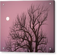 Moon And Tree Acrylic Print