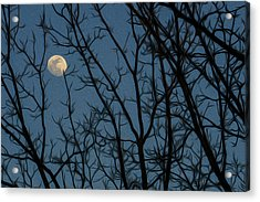 Moon At Dusk Through Trees - Impressionism Acrylic Print
