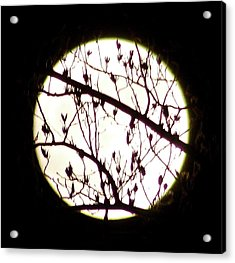 Moon Branches Acrylic Print