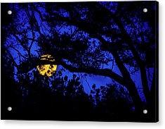 Moon Harvest Acrylic Print by Mark Andrew Thomas