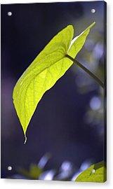 Moon Leaf Acrylic Print by Ross Powell