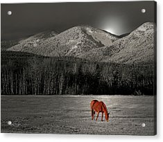 Moon Of The Wild Horse Acrylic Print