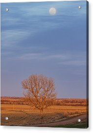 Acrylic Print featuring the photograph Moon Over Tree by Rob Graham