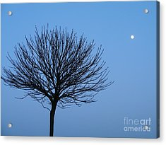 Moon Rise Acrylic Print by Michael Canning