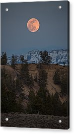 Moon Rising // Tower Junction, Yellowstone National Park Acrylic Print
