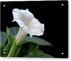 Moonflower - Rain Drops Acrylic Print
