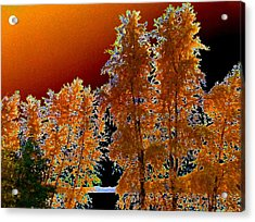 Moonglow Brilliance Acrylic Print by Will Borden