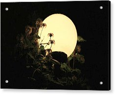 Moonglow Thistles Acrylic Print