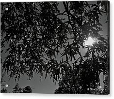 Acrylic Print featuring the photograph Moonlight by Betty Northcutt