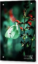 Moonlight Butterfly Acrylic Print