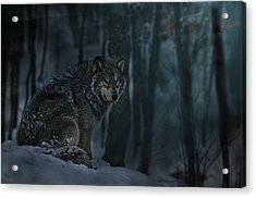 Moonlight Majesty Acrylic Print by Michael Cummings