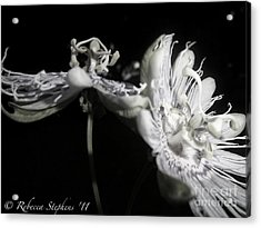 Moonlight Promenade - A Passion Fruit Production Acrylic Print by Rebecca Stephens