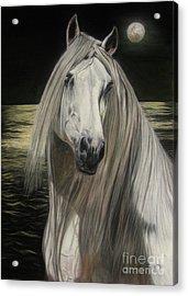 Moonlight Acrylic Print by Sabine Lackner