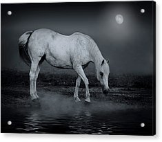 Moonlight Shadow Acrylic Print