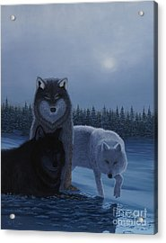 Moonlight Wolves Acrylic Print by Stanza Widen