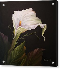 Moonlit Calla Lily Acrylic Print by Sherry Winkler