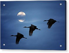 Moonlit Flight Acrylic Print