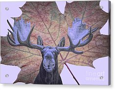 Acrylic Print featuring the photograph Moonlit Moose by Ray Shiu