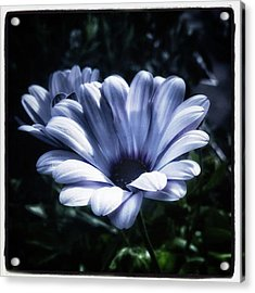 Acrylic Print featuring the photograph Moonlit Petals. From The Beautiful by Mr Photojimsf