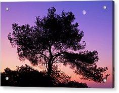 Moonlit Serenade Acrylic Print