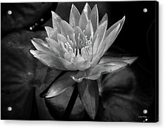Moonlit Water Lily Bw Acrylic Print