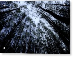 Moonlite Forest Acrylic Print by M K  Miller