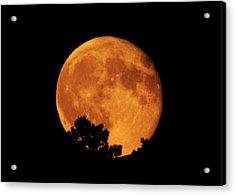 Moonrise Over Pines Acrylic Print
