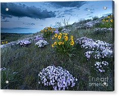 Moonrise Over Snow Mountain Ranch Acrylic Print by Mike Dawson