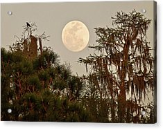 Moonrise Over Southern Pines Acrylic Print