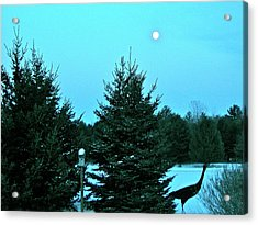Acrylic Print featuring the photograph Moony Blue by Randy Rosenberger