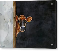 Moo's There? Acrylic Print by Art Scholz