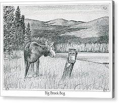 Moose At Big Brook Bog Acrylic Print