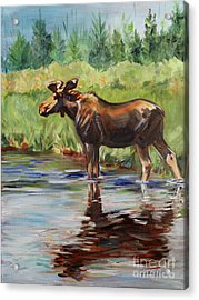 Moose At Henry's Fork Acrylic Print