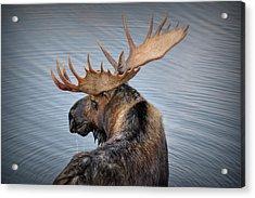 Moose Drool Acrylic Print