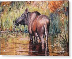 Moose In Alaska Acrylic Print by Terri Thompson