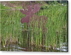Acrylic Print featuring the photograph Moose In Bulrushes by Sue Smith