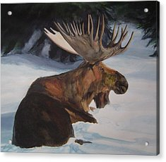 Moose In Winter Acrylic Print by Susan Tilley