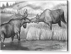 Moose Looking For Love Acrylic Print by Russ  Smith