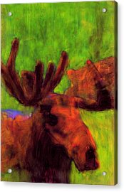 Moose Moments Acrylic Print