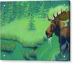 Moose Acrylic Print by Tracy L Teeter