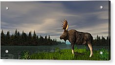 Moose Acrylic Print by Walter Colvin