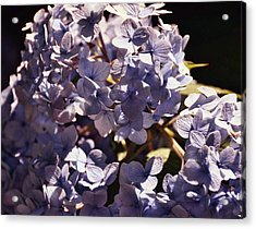 Mopheads Acrylic Print by JAMART Photography