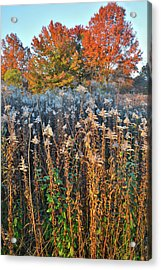 Acrylic Print featuring the photograph Moraine Hills Fall Colors by Ray Mathis