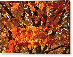 Acrylic Print featuring the photograph Moraine Hills Sugar Maple by Ray Mathis