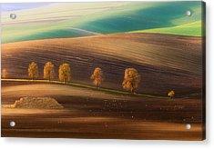 Moravian Trees Acrylic Print by Piotr Krol (bax)