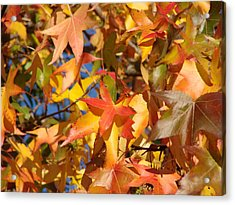 More Autum Leaves Acrylic Print by Liz Vernand