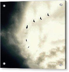 Big Sky Crows Acrylic Print