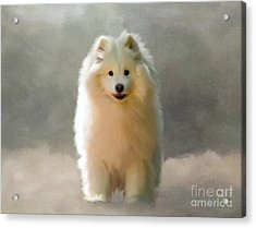 More Snow Please Acrylic Print by Lois Bryan