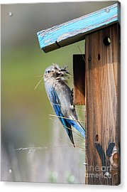 Acrylic Print featuring the photograph More Than Mouthful by Mike Dawson