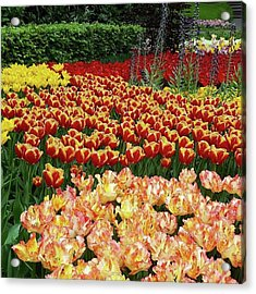 More #tulip Goodness From #keukenhof Acrylic Print by Dante Harker